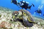 Discover Scuba Diving Course in Playa del Carmen