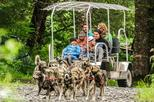 Kennel Tour and Dog Sled Ride