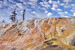 Yellowstone Nature and Wildlife Upper Loop Tour from Cody Wyoming
