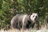Yellowstone National Park Full-Day Tour From West Yellowstone