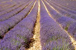 Lavender and Villages in Provence Small Group Day Trip, Avignon,