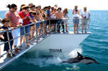 Auckland's Whale and Dolphin Safari Cruise, Auckland, Dolphin & Whale Watching