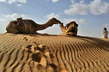 Full day Camel Safari Oman Wahiba Sands