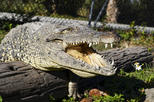 Half Day Everglades Tour with Transportation
