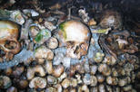 Skip the Line: Paris Catacombs Small-Group Tour