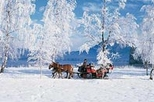 Christmas Horse Drawn Sleigh Ride from Salzburg
