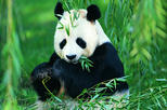 Chengdu Private Day Tour: Pandas, Kuanzhai Ancient Street, and Jinli Ancient Street