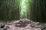 Bamboo Forest Hiking Trek, Maui, Hiking & Camping