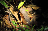 Night tour near of San Jose watch spider frog and many more with this walking
