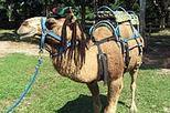 Camel Ride and Plantation Tour, Ocho Rios, Nature & Wildlife