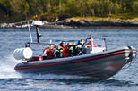 Spot the First Whales of the Season - RIB Boat Tour from Tromso