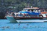 Akaroa Harbour Nature Cruise, Christchurch, Dolphin & Whale Watching