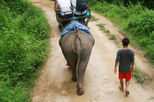 Elephant Ride and Jungle Trek Half-Day Tour from Pattaya, Pattaya, Nature & Wildlife