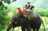 One-Hour Elephant Jungle Trek from Phuket, Phuket,