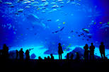 Sentosa S.E.A. Aquarium™ Admission in Singapore with Optional Hotel Transport, Singapore,
