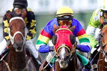 Singapore Turf Club Horse Racing Tour, Singapore, Sporting Events & Packages