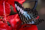 Penang Butterfly Farm Half-Day Tour