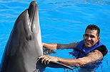 Cabo Dolphin Encounters, Los Cabos, Swim with Dolphins