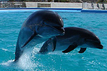 Swim with the Dolphins in Cabo San Lucas, Los Cabos,