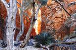 Angkerle Standley Chasm Tour from Alice Springs Including 4-Course Dinner