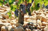 Full Day Cotes du Rhone Wine Tour with Tasting from Avignon