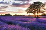 PRIVATE Full Day Provencal Villages and Lavender Fields Walking Tour from Avignon