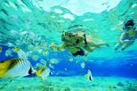Gold Coast Guided Snorkel with Fish Tour