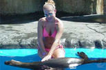 Combination Dolphin and Sea Lion Encounter