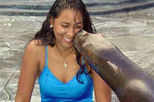 Sea Lion Encounter at Ocean World