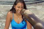 Sea Lion Encounter at Ocean World, Puerto Plata, Nature & Wildlife