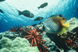 Grand Cayman Shore Excursion: Semi-Submarine and Fish Feeding Show, Cayman Islands, Ports of Call ...
