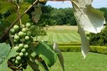 Hudson Valley Vineyard and Wine Tasting Experience