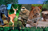 Private Day Tour To Kandy With Pinnawala Open Zoo From Mount Lavinia
