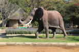Elephant and Monkey Santuary and Rhino and Lion Nature Reserve Day Tour From Johannesburg