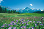 Switzerland Countryside and Traditions Tour from Zurich, Zurich, Day Trips