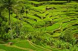 Private Tour: Half-Day Ubud and Tampak Siring Tour from Bali