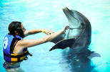 Dolphin Encounter at Aquaventuras Park with Entrance Ticket