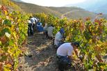 Douro Grape Harvest Small Group Tour with Grape Picking and Wine Tasting