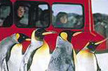 Kelly Tarlton's Antarctic Encounter and Underwater World Entry Ticket, Auckland, Attraction Tickets