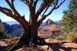 Old Bear Wallow Tour from Sedona, Sedona & Flagstaff, 4WD, ATV & Off-Road Tours