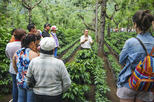 Coffee Tour from Managua