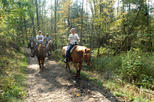 Horseback Riding Lesson in Pusteria Valley