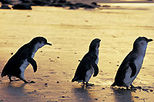 Phillip Island 3 Parks Pass - Penguin Parade and more!, Victoria, Attraction Tickets