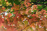 Fall Foliage Spectacular Tour from Boston, Boston, Seasonal Events