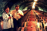Wine Tasting - Cote de Nuits Region with One Cellar Visit, Burgundy & Dijon, Day Trips