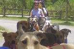 Jamaican Dogsled Tour, Ocho Rios, Nature & Wildlife
