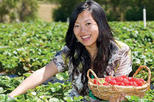 Mornington Peninsula including Strawberry Farm Day Tour from Melbourne, Melbourne, Bus & Minivan ...