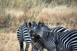 4 Days 3 Nights Safari Mikumi National Park from Zanzibar