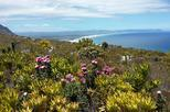 Wine & Fynbos  Walk in the Overberg's beautiful Hemel & Aarde Valley,Hermanus
