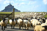 Private Walking Tour of Mont-St-Michel and Surroundings